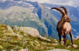 TMB环勃朗峰徒步·法瑞意极限挑战之旅